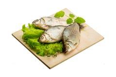 Crucian fish Stock Image