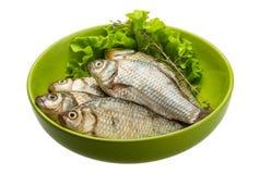 Crucian fish Royalty Free Stock Photos