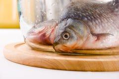 crucian fisk för carp Royaltyfria Foton