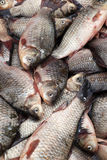 Crucian, fresh fish-3. Carp, fresh fish on sale in the market Royalty Free Stock Images