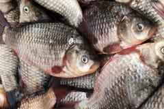 Crucian, fresh fish-1. Carp, fresh fish on sale in the market Stock Photo