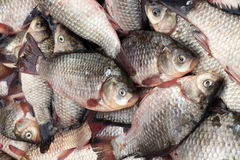 Crucian, fresh fish-2. Carp, fresh fish on sale in the market Stock Photography