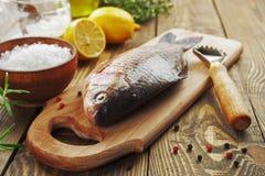 Crucian, peixe Fotografia de Stock