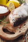 Crucian, peixe Imagem de Stock Royalty Free