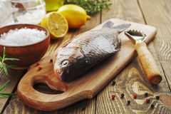 Crucian, poisson Photographie stock
