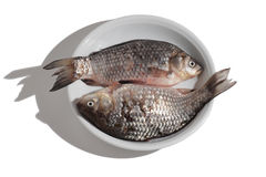 Crucian on a teller Stock Photography