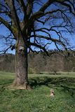 Crucifijo bajo el árbol Imagenes de archivo