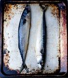 Crude mackerel Royalty Free Stock Image