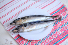 Crude mackerel Stock Image