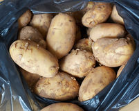 Crude potato Stock Images