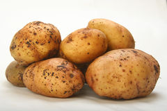 Crude potatoes Stock Photography