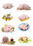 Crude and roast chicken. Royalty Free Stock Image