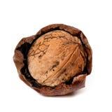 Crude walnut isolated on white background Royalty Free Stock Images