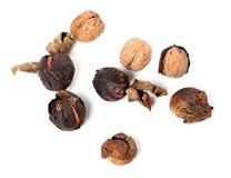 Crude walnuts Stock Photos
