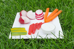 Crudites. With blue cheese souce, cutted vegetable Royalty Free Stock Images