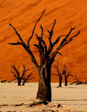 Cruel summer. The surreal Dead Vlei in Namibia stock photo
