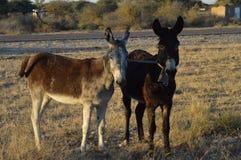 Crueldade animal imagens de stock royalty free