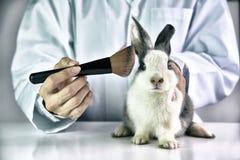 Crueldade livre e conceito animal do abuso da parada fotografia de stock