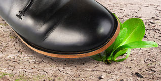Cruelty. Mens foot almost hit the defenceless plant Stock Photos