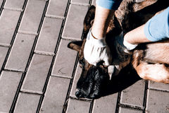 Cruelty to animals Royalty Free Stock Photo