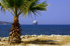 Cruise liner and palm tree Stock Photography