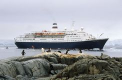 Cruise ship Marco Polo and Gentoo penguins (Pygoscelis papua) in Paradise Harbor, Antarctica Stock Images