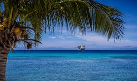 Cruise ship next to palm tree. A cruise ship is framed inside a palm tree Stock Photography