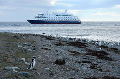 Cruise ship Via Australis at the Chilean island of Magdalena. Royalty Free Stock Image