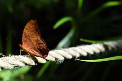 Butterfly perched on a rope swing stock images