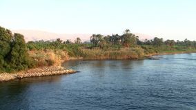 Cruising by the bank of the river Nile in Egypt. Cruising by a grove of palms and shrubs on the bank of the river Nile in Egypt stock video footage