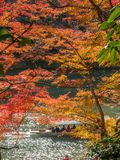 Cruising boat along river in Arashiyama, Japan. KYOTO, JAPAN - OCTOBER 24 : Old classic cruising boat along river with colorful leaves trees in autumn season in Stock Images