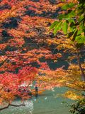 Cruising boat along river in Arashiyama, Japan. KYOTO, JAPAN - OCTOBER 24 : Old classic cruising boat along river with colorful leaves trees in autumn season in Stock Photos