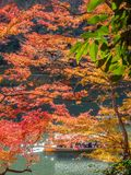 Cruising boat along river in Arashiyama, Japan. KYOTO, JAPAN - OCTOBER 24 : Old classic cruising boat along river with colorful leaves trees in autumn season in Royalty Free Stock Photo