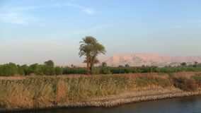 The bank of the river Nile in Egypt with Palms. Cruising by a grove of palms and dry golden grass on the bank of the river Nile in Egypt stock footage