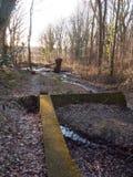 crujido corriente del agua a través del arbolado del bosque con la naturaleza de la pared Fotos de archivo libres de regalías