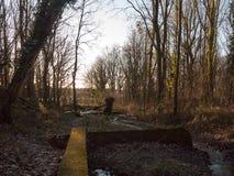 crujido corriente del agua a través del arbolado del bosque con la naturaleza de la pared Foto de archivo