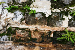 Crumbling Brick Wall with Moss and Plants. Crumbling brick wall with broken stucco and small succulent plants and moss growing in the cracks Stock Photo