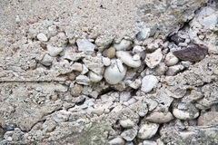 Crumbling Concrete foundation wall Royalty Free Stock Images