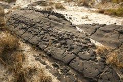 Crumbling ruins of Baltimore Boulevard on Assateague Island, Mar Royalty Free Stock Image