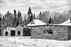 Crumbling sheds and a cabin. Abandoned log cabin and sheds on a homestead in front of forest of trees in black and white Royalty Free Stock Photo