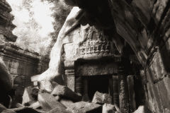 Crumbling Ta Prohm ruin Stock Images
