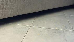 Crumbs νιφάδων καλαμποκιού πτώση στο πάτωμα δίπλα στον καναπέ Δημητριακά στο πάτωμα στο γκρίζο κεραμίδι Πλάγια όψη απόθεμα βίντεο
