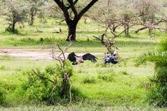 Crumenifer de Leptoptilos de cigogne de marabout par le lac Images libres de droits