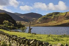 Crummock Water and dead tree Stock Photo