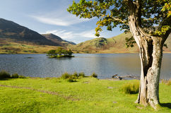 Crummock Water with hollow tree Stock Photo