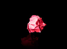 Crumpled red paper on a black background Stock Image