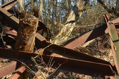 Collapsed oil Derrick in the forest. The crumpled remains of a collapsed oil Derrick in the forest rust away with time Stock Images