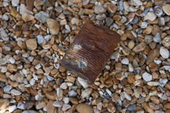 Crumpled and rusty tin can. On the floor Royalty Free Stock Image
