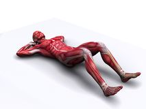 Crunch - abs workout. 3d rendered anatomy illustration of a male body with muscles stock illustration