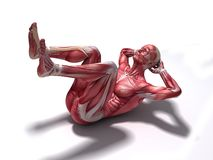 Crunch - abs workout. 3d rendered anatomy illustration of male muscle system Royalty Free Stock Photo